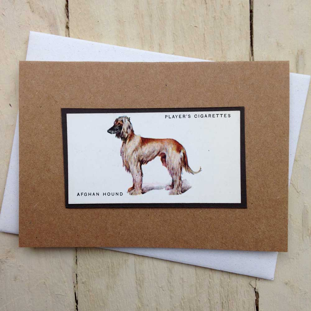 Afghan Hound card - The Enlightened Hound