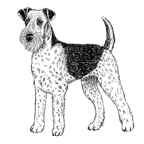 Airedale Terrier Illustration by Debbie Kendall