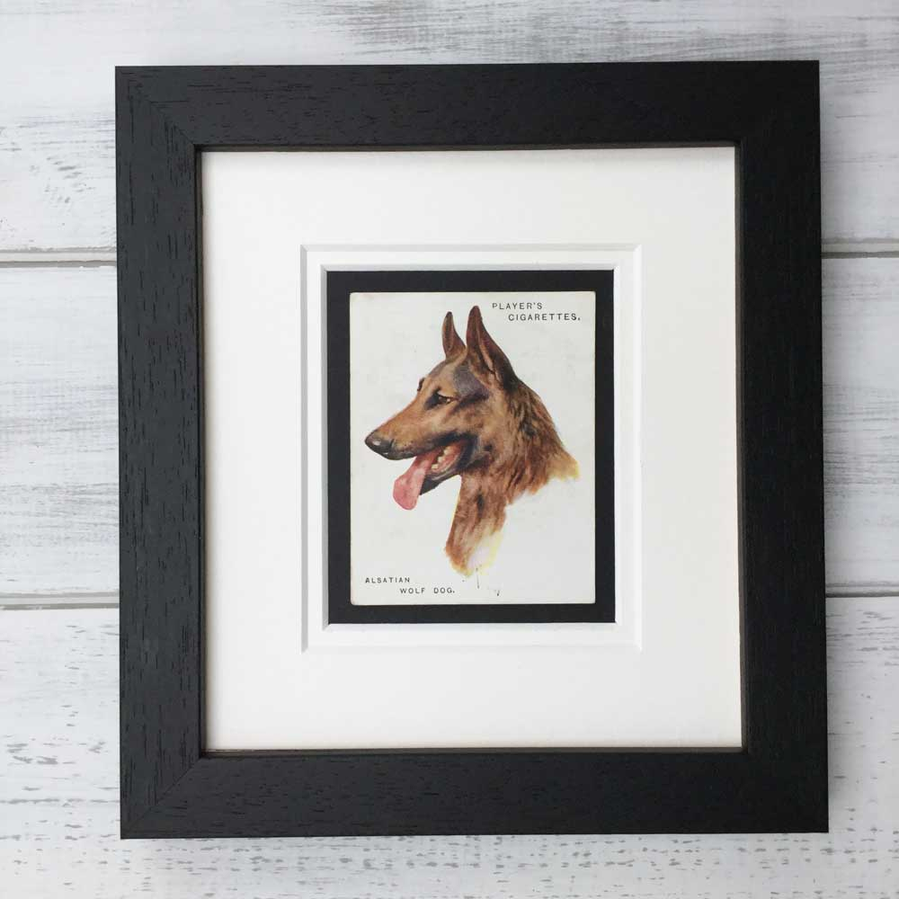 German Shepherd Vintage Print - The Enlightened Hound