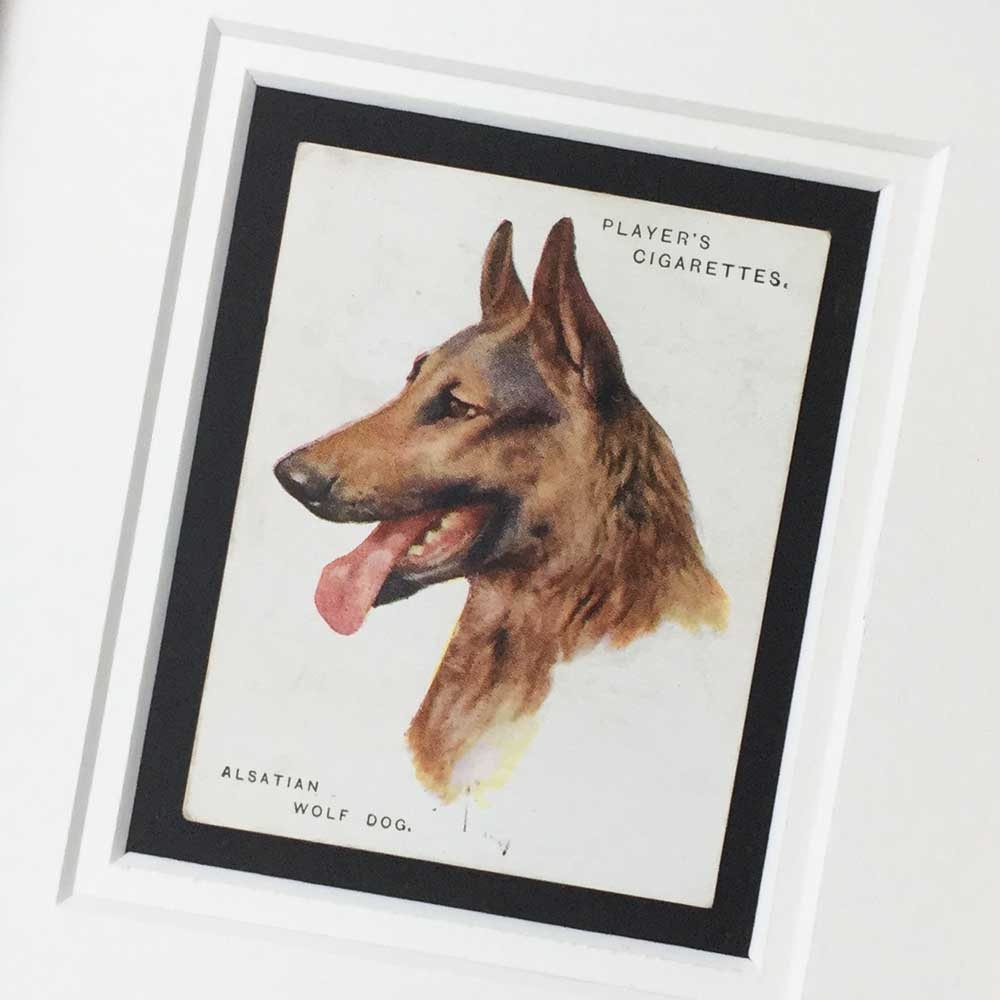 Alsatian Dog Vintage Gifts - The Enlightened Hound