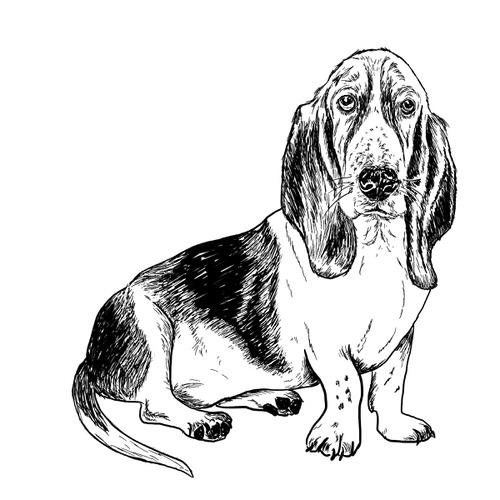Basset Hound illustration by Debbie Kendall
