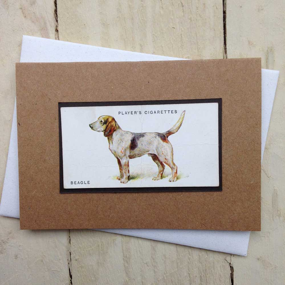 Beagle Vintage Greeting Card - The Enlightened Hound
