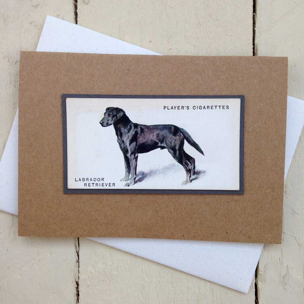 Black Labrador Greeting Card by The Enlightened Hound