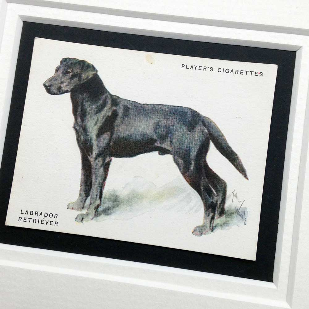 Black Labrador Vintage Gifts - The Enlightened Hound