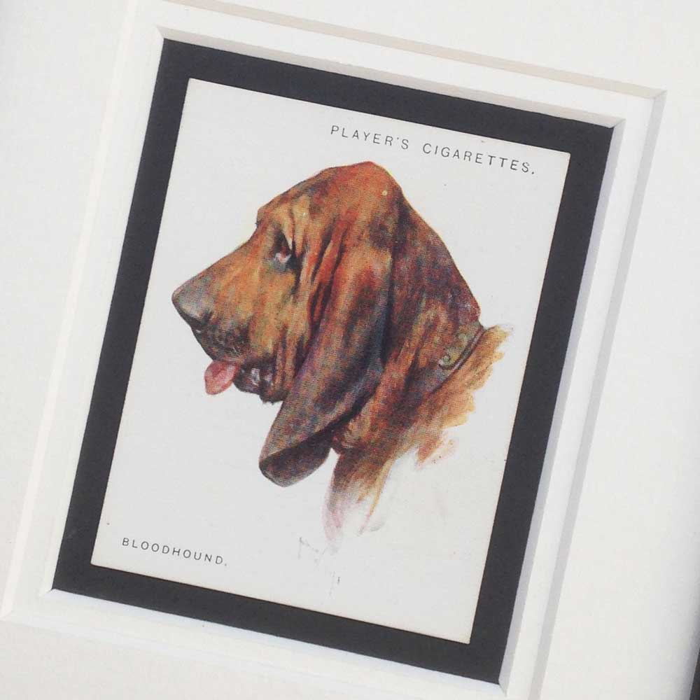 Bloodhound Vintage Gifts - The Enlightened Hound