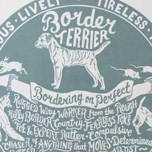 Border Terrier Print Detail by Debbie Kendall