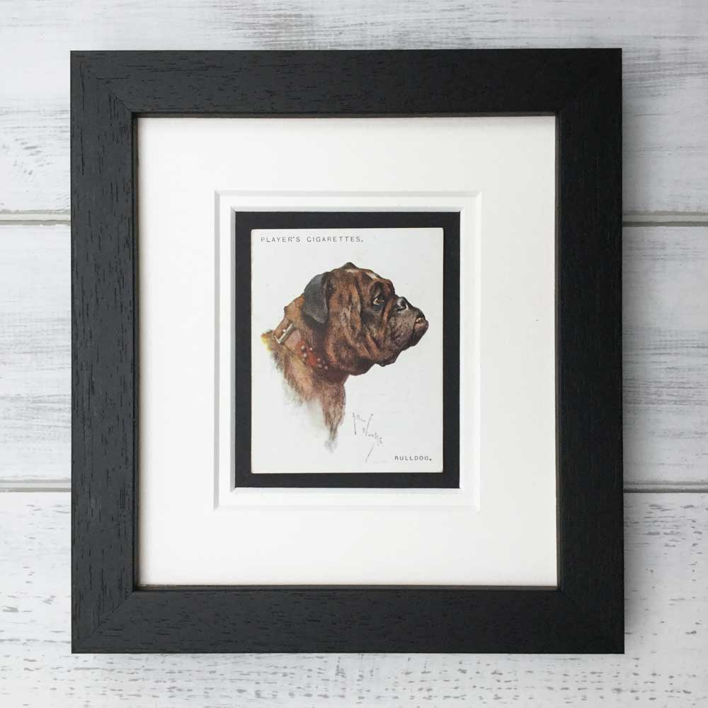 Vintage Gifts for British Bulldog Lovers - The Enlightened Hound