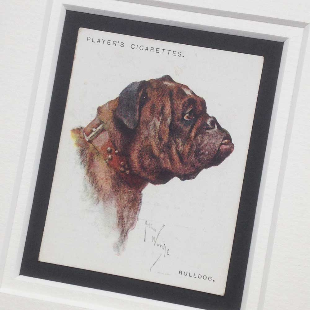 British Bulldog Vintage Gifts - The Enlightened Hound