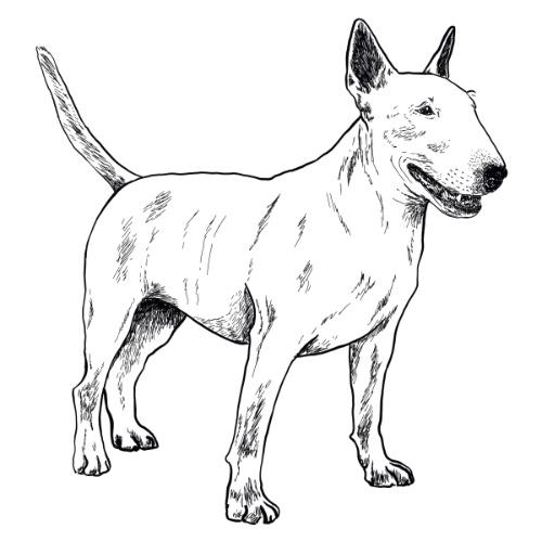 English Bull Terrier Illustration   The Enlightened Hound