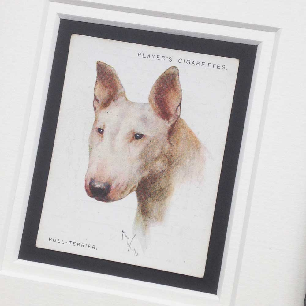 Bull Terrier Vintage Gifts - The Enlightened Hound