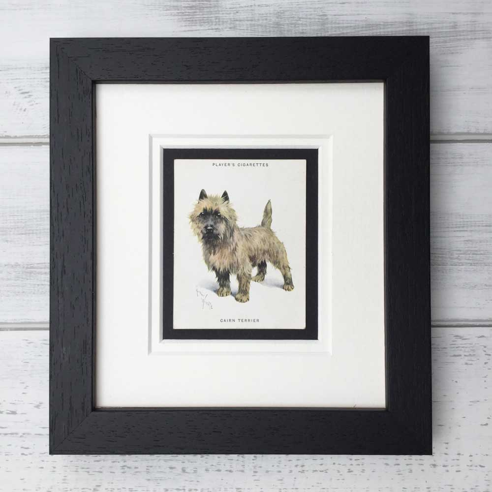 Cairn Terrier Vintage Print - The Enlightened Hound