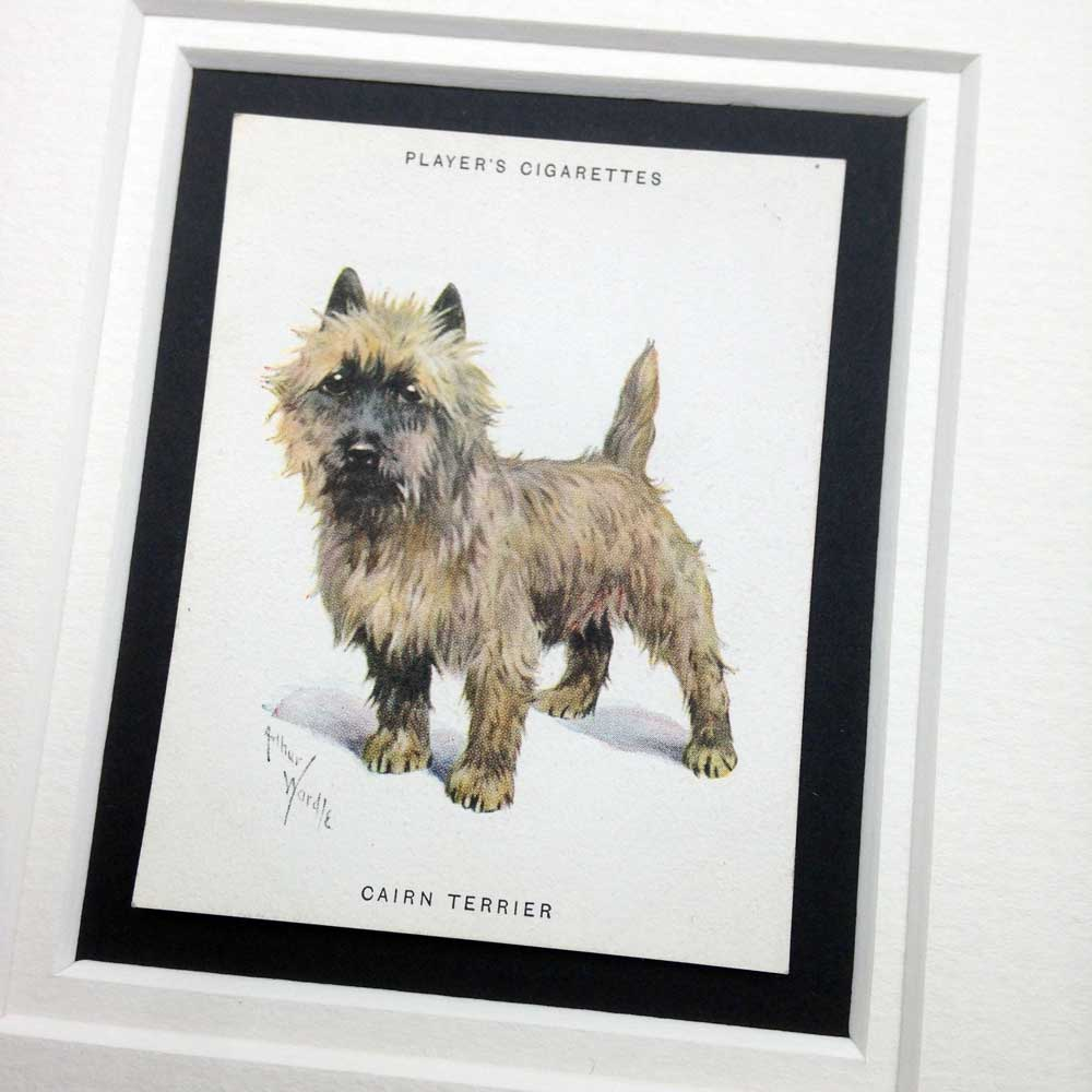 Cairn Terrier Vintage Gifts - The Enlightened Hound