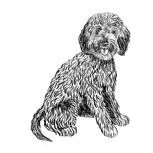Cavapoo illustration by Debbie Kendall