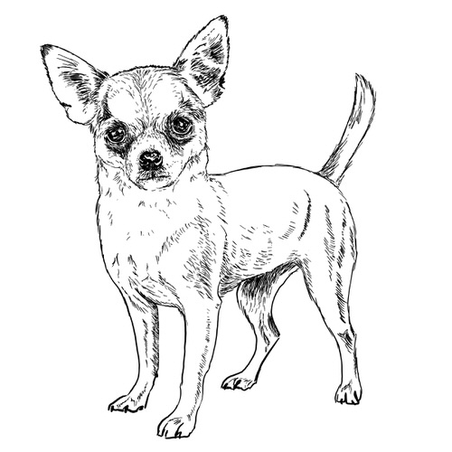 Chihuahua illustration by Debbie Kendall