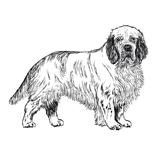 Clumber Spaniel Illustration   The Enlightened Hound