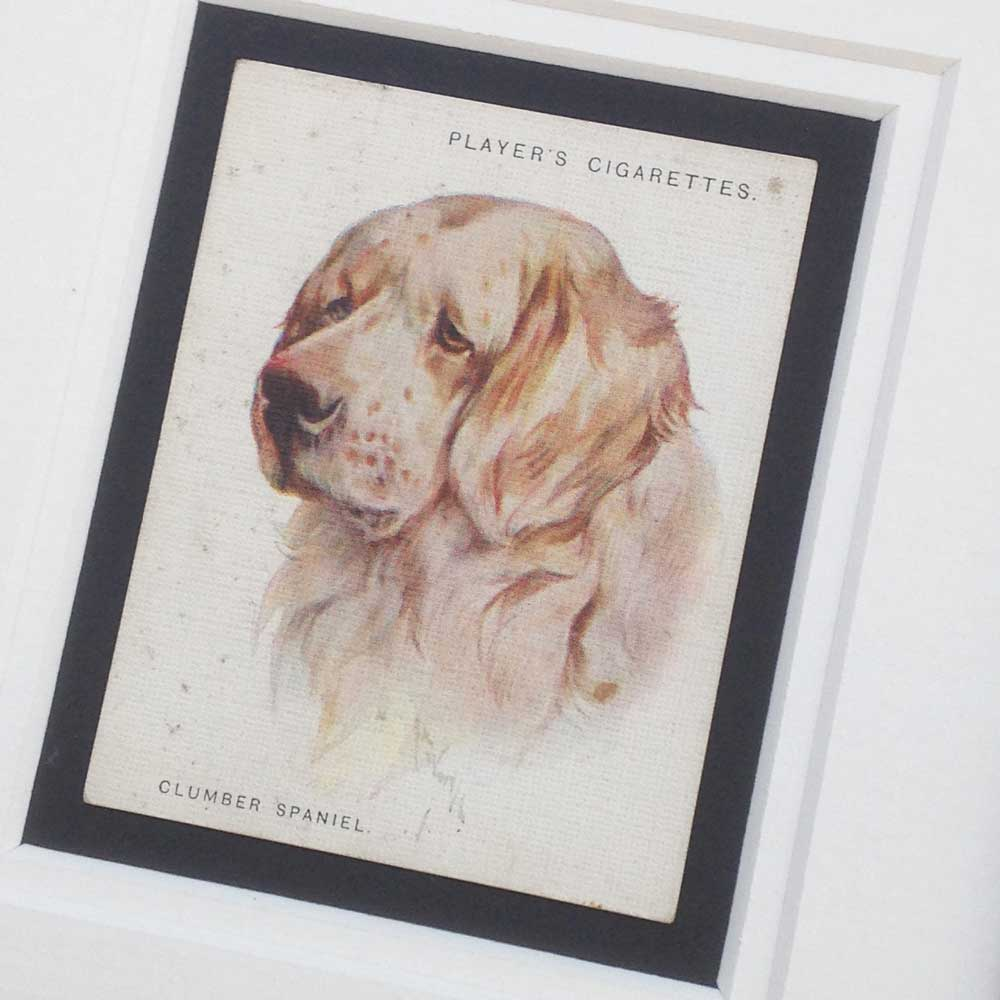 Clumber Spaniel Gift - The Enlightened Hound