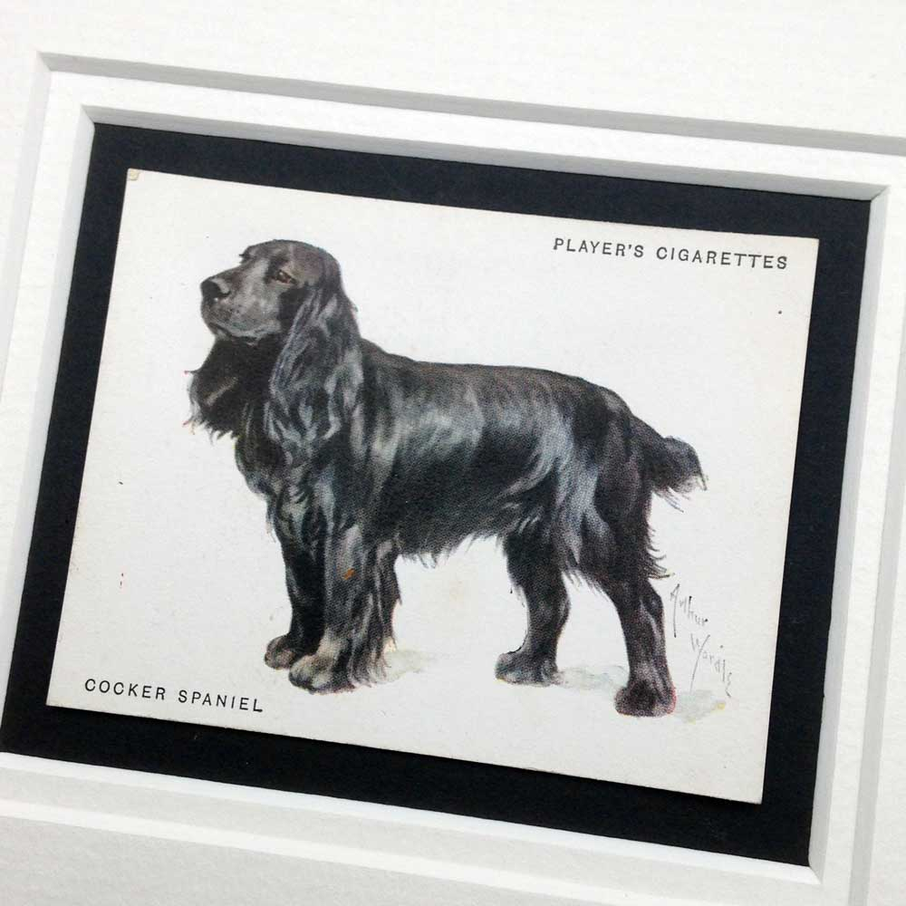 Cocker Spaniel Vintage Gifts - The Enlightened Hound
