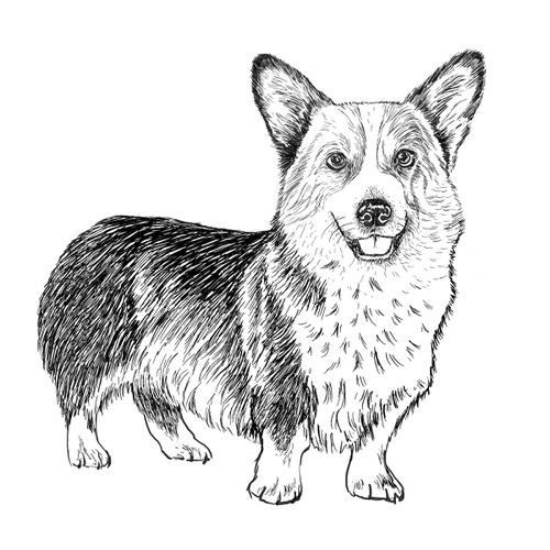 Corgi (Welsh Pembroke) illustration by Debbie Kendall