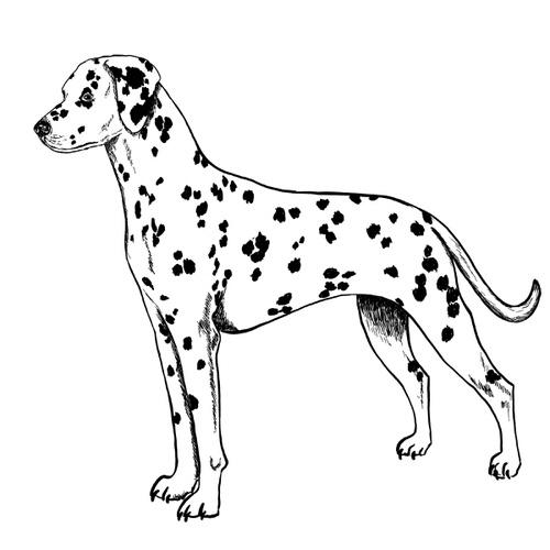 Dalmatian illustration by Debbie Kendall