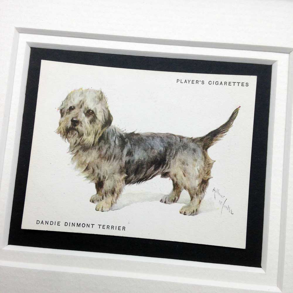 Dandie Dinmont Terrier Vintage Gifts - The Enlightened Hound