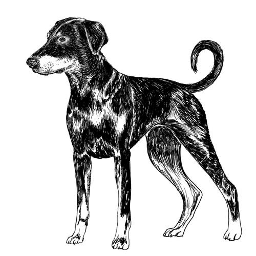 Doberman illustration by Debbie Kendall