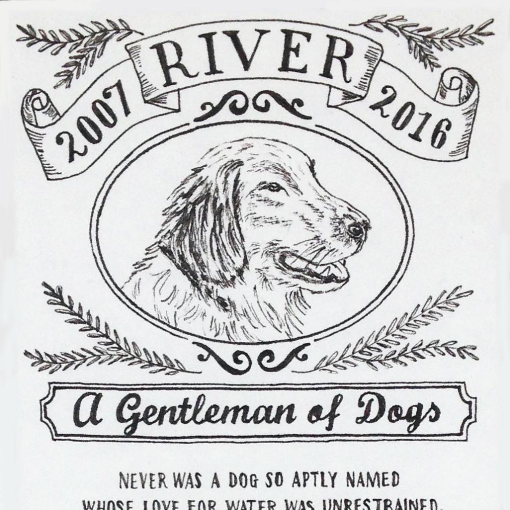 Dog Illustration Retriever Portrait Pen Ink |The Enlightened Hound