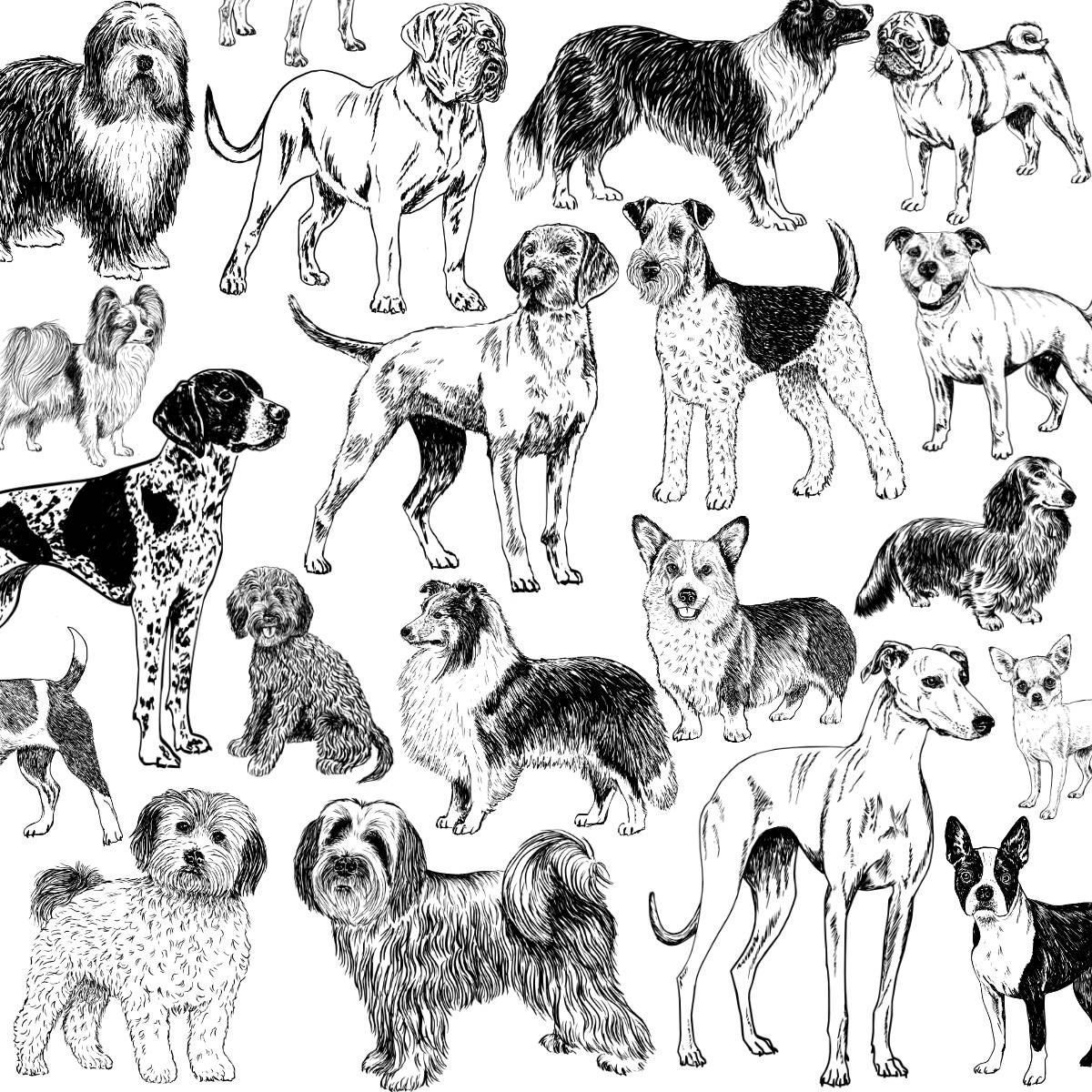 Dog Breed Illustrations | The Enlightened Hound
