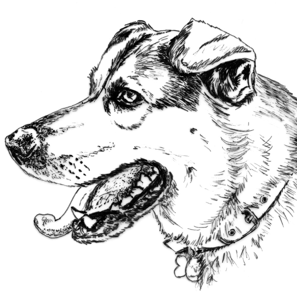 Dog Pen Ink Illustration | The Enlightened Hound