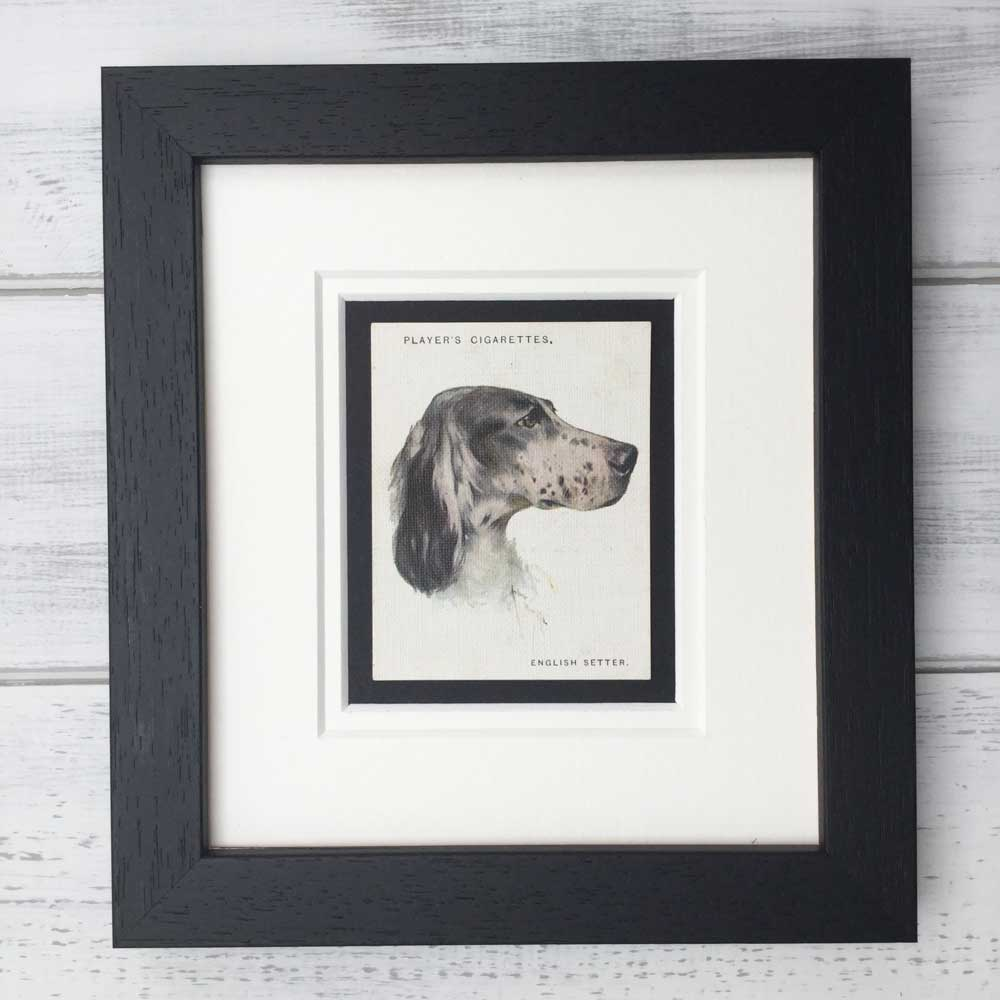 Gifts for English Setter Lovers - The Enlightened Hound