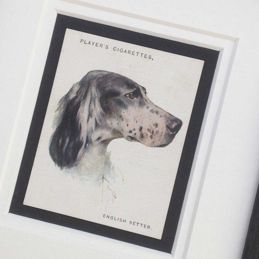 English Setter Gifts - The Enlightened Hound