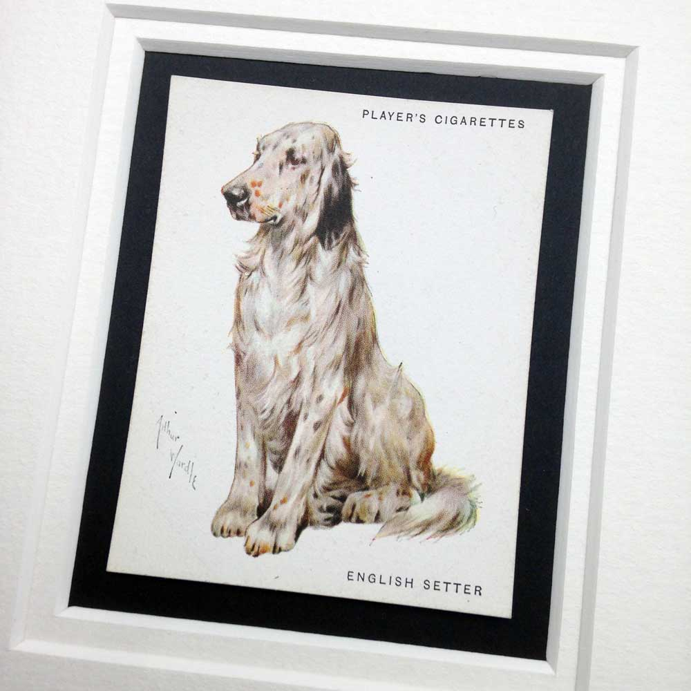 English Setter Vintage Gifts - The Enlightened Hound