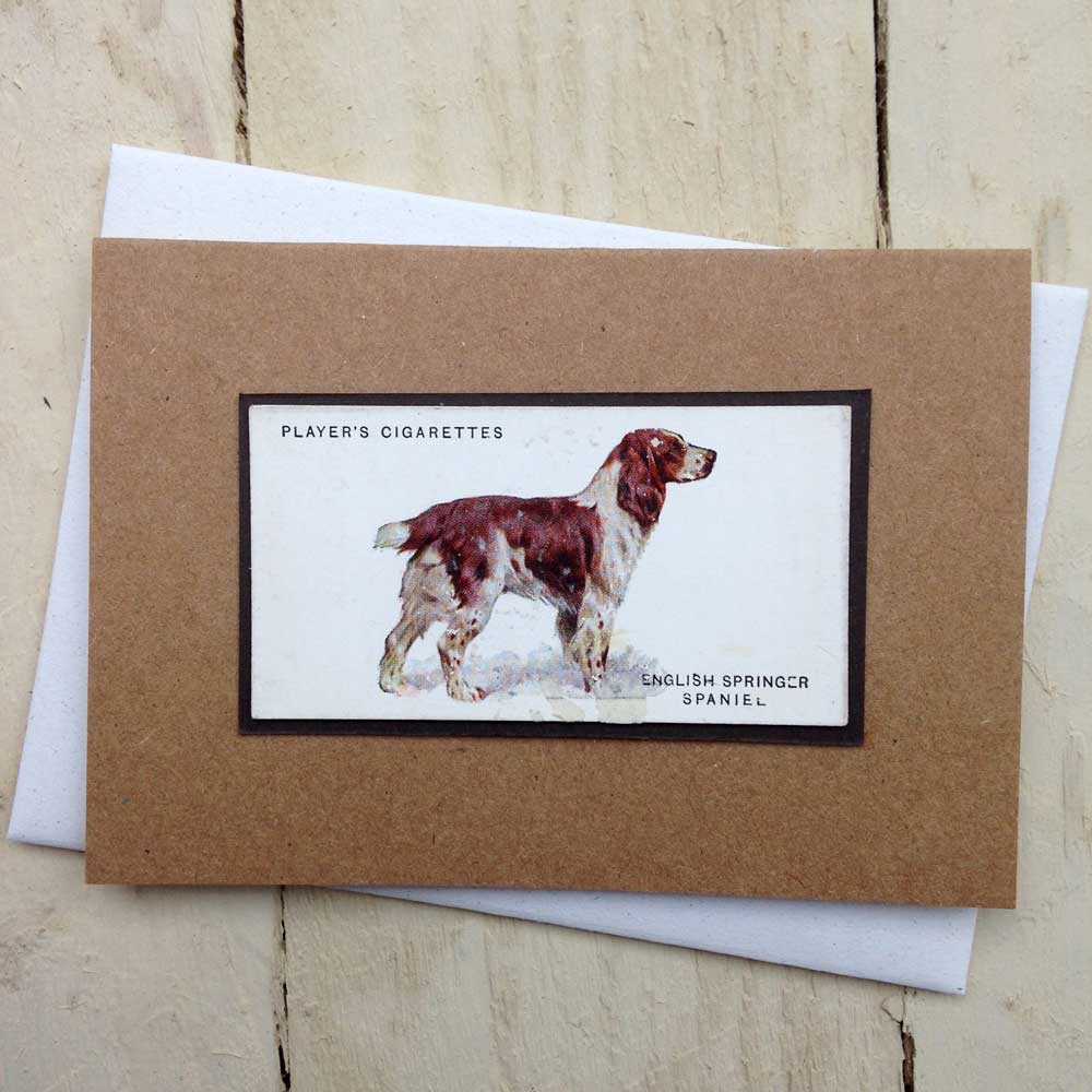 Springer Spaniel Greeting Card by The Enlightened Hound