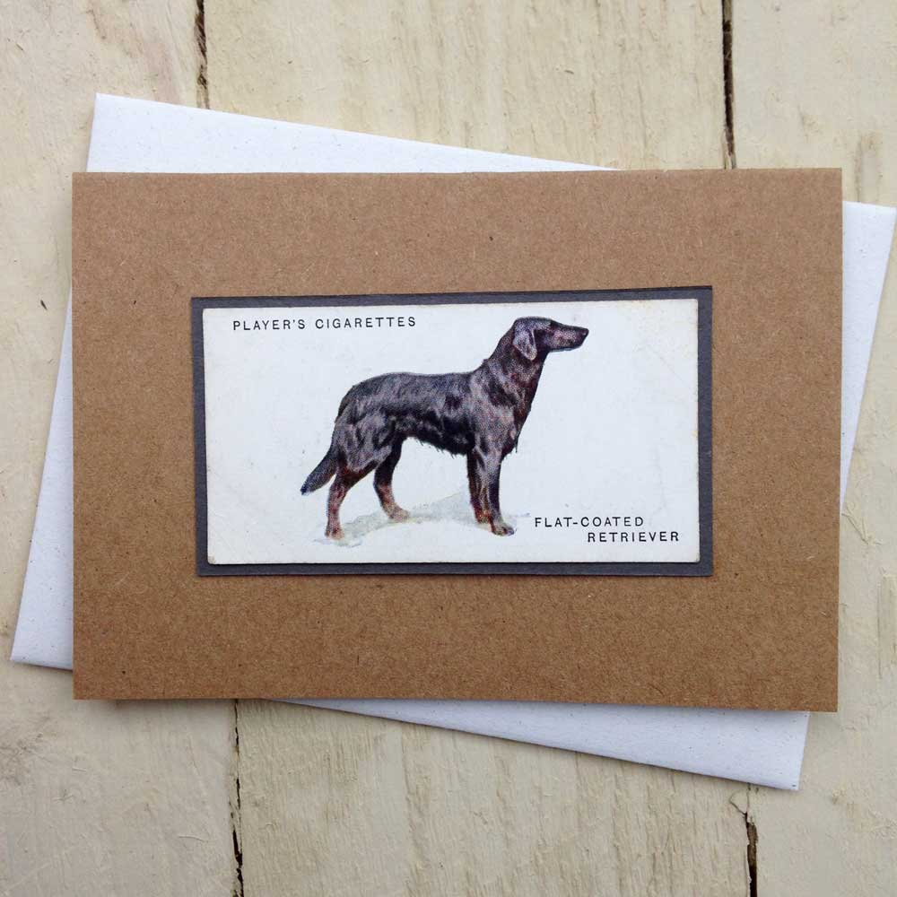 Flat Coated Retriever Vintage Greeting Card - The Enlightened Hound