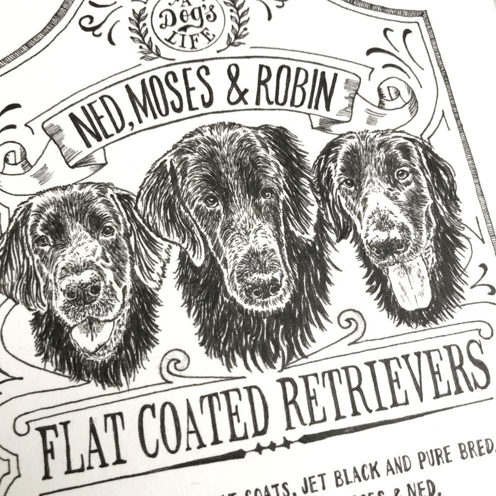 Dog Illustration Flat Coated Retrievers Portrait Pen Ink |The Enlightened Hound