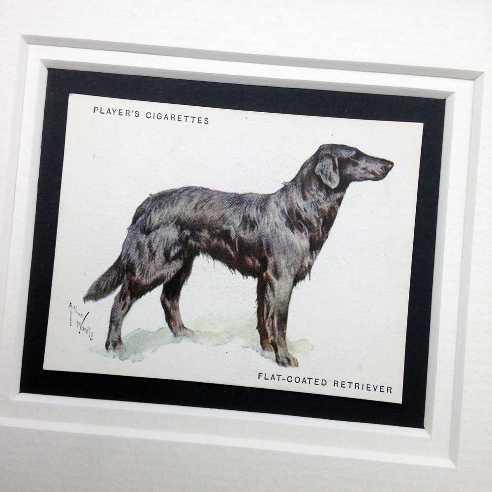Flat Coat Retriever Vintage Gifts - The Enlightened Hound