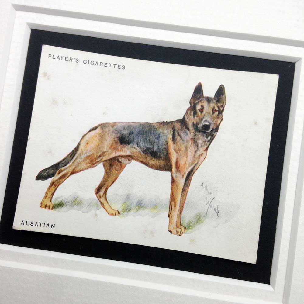 German Shepherd Dog Vintage Gifts - The Enlightened Hound