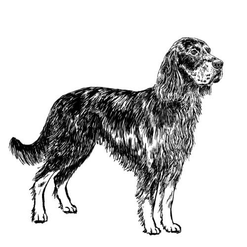 Gordon Setter Illustration   The Enlightened Hound