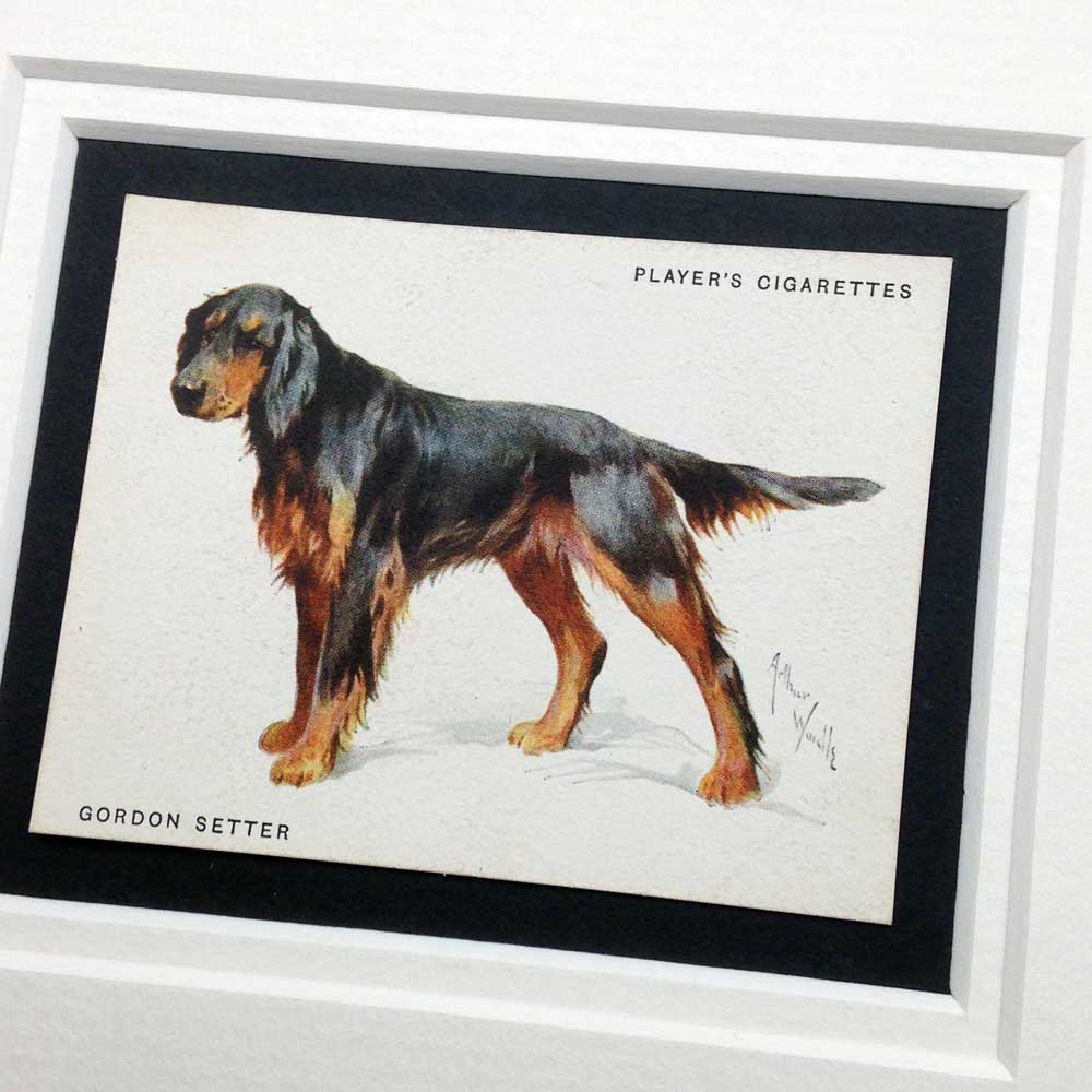 Gordon Setter Vintage Gifts - The Enlightened Hound
