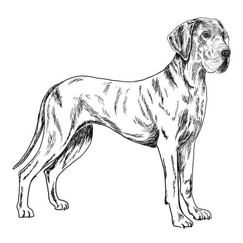 Great Dane illustration by Debbie Kendall