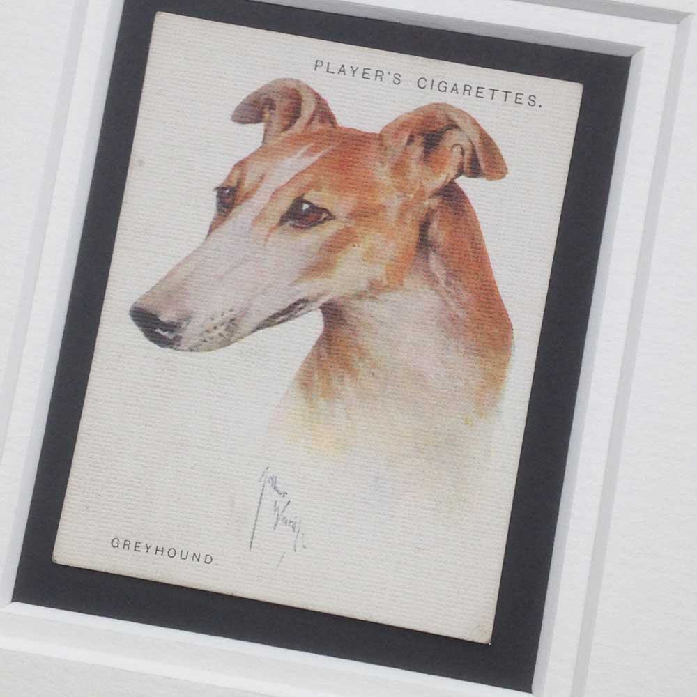 Greyhound Vintage Gifts - The Enlightened Hound