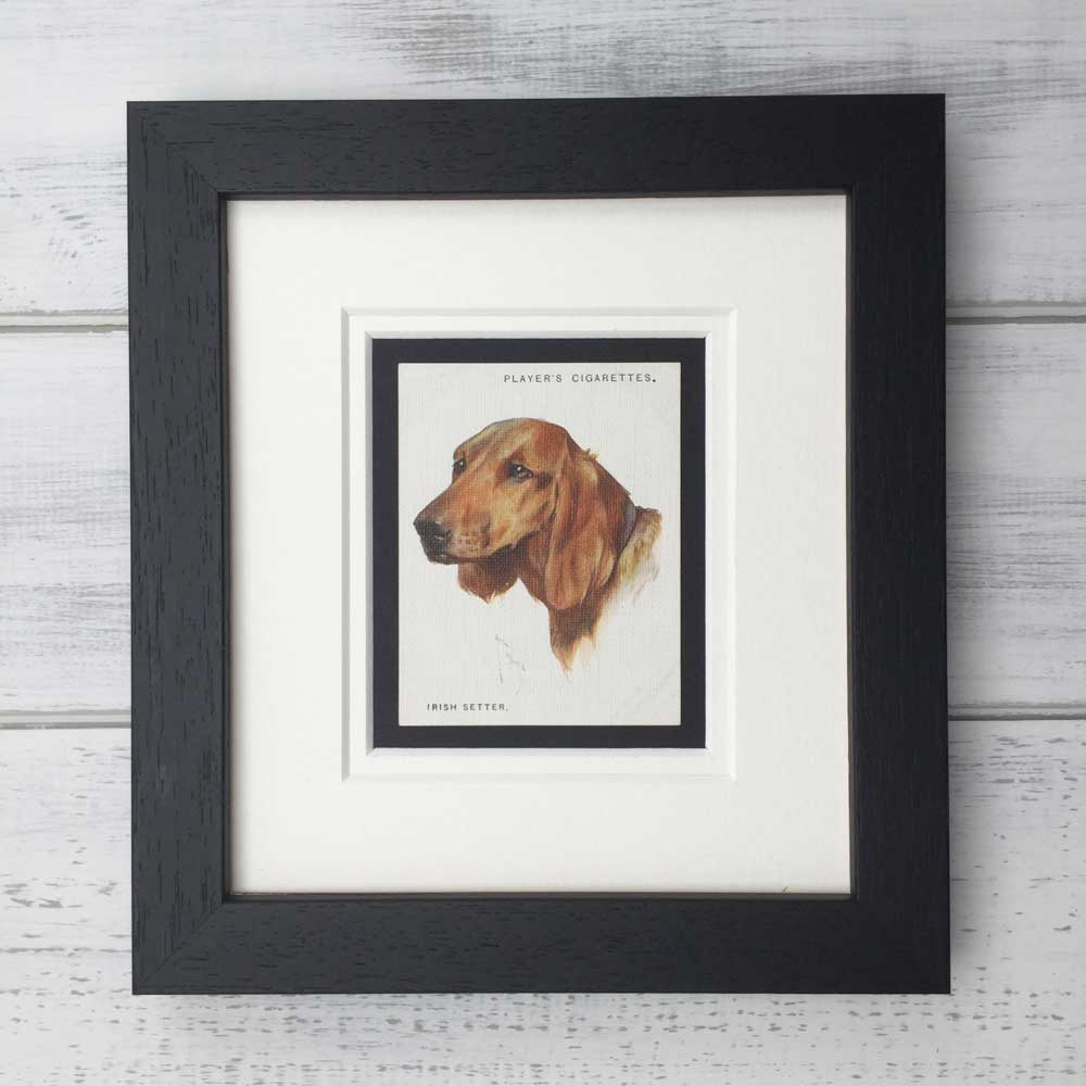 Irish Setter Vintage Print - The Enlightened Hound