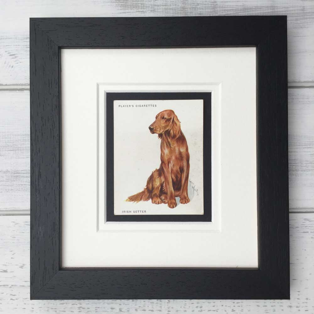 Irish Red Setter Vintage Print - The Enlightened Hound