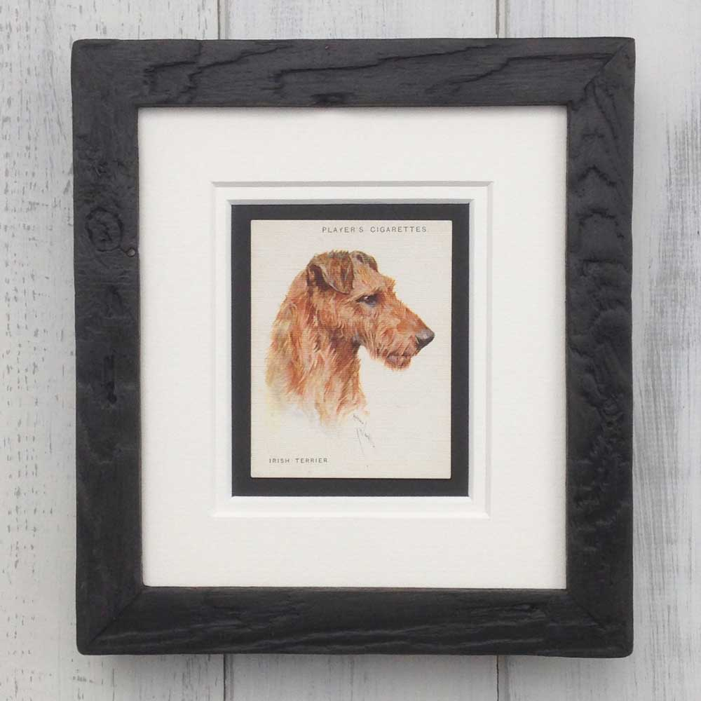 Vintage Gifts for Irish Terrier Lovers - The Enlightened Hound
