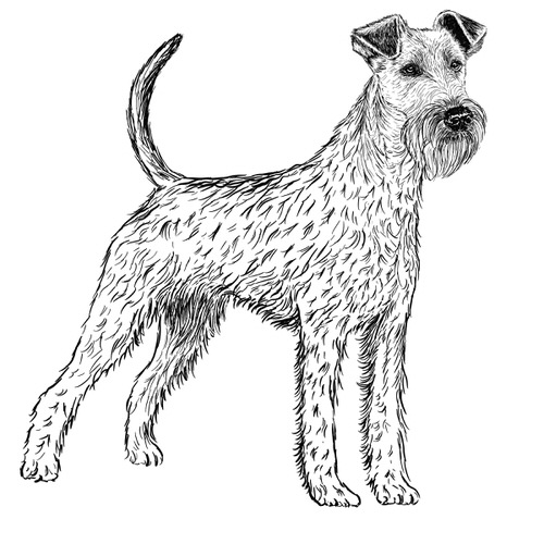 Irish Terrier Illustration by Debbie Kendall
