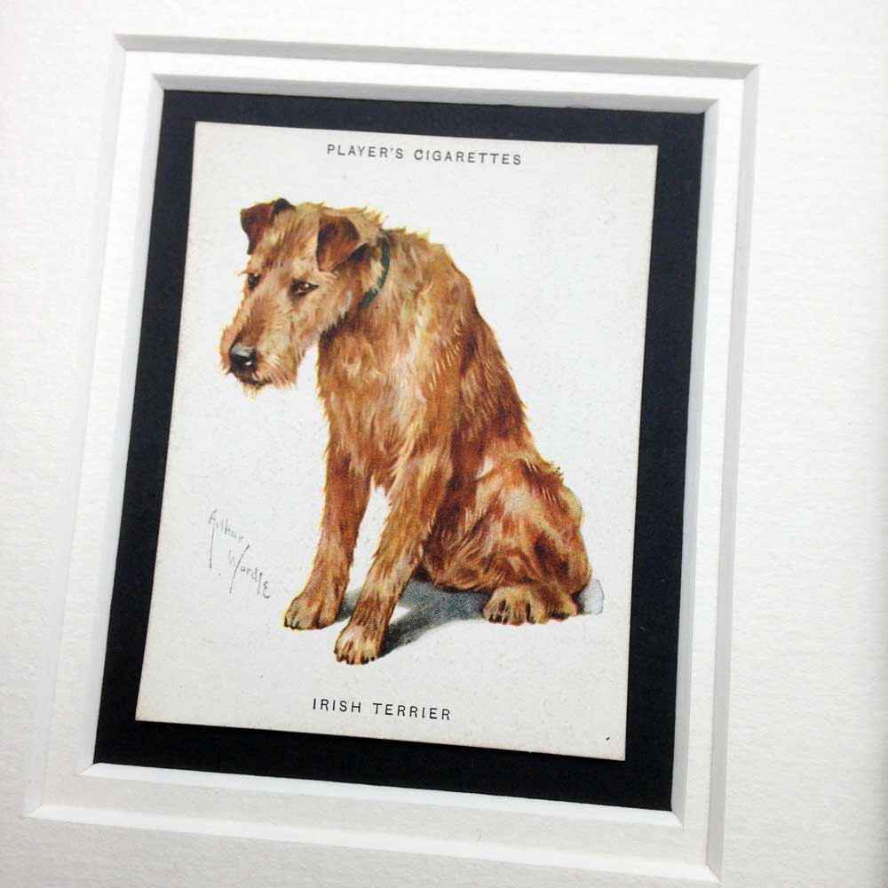 Irish Terrier Vintage Gifts - The Enlightened Hound