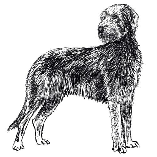 Irish Wolfhound Illustration   The Enlightened Hound