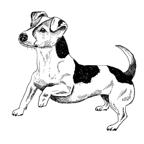 Jack Russell Terrier Illustration by Debbie Kendall
