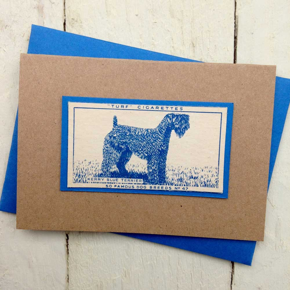 Kerry Blue Terrier greeting card - The Enlightened Hound