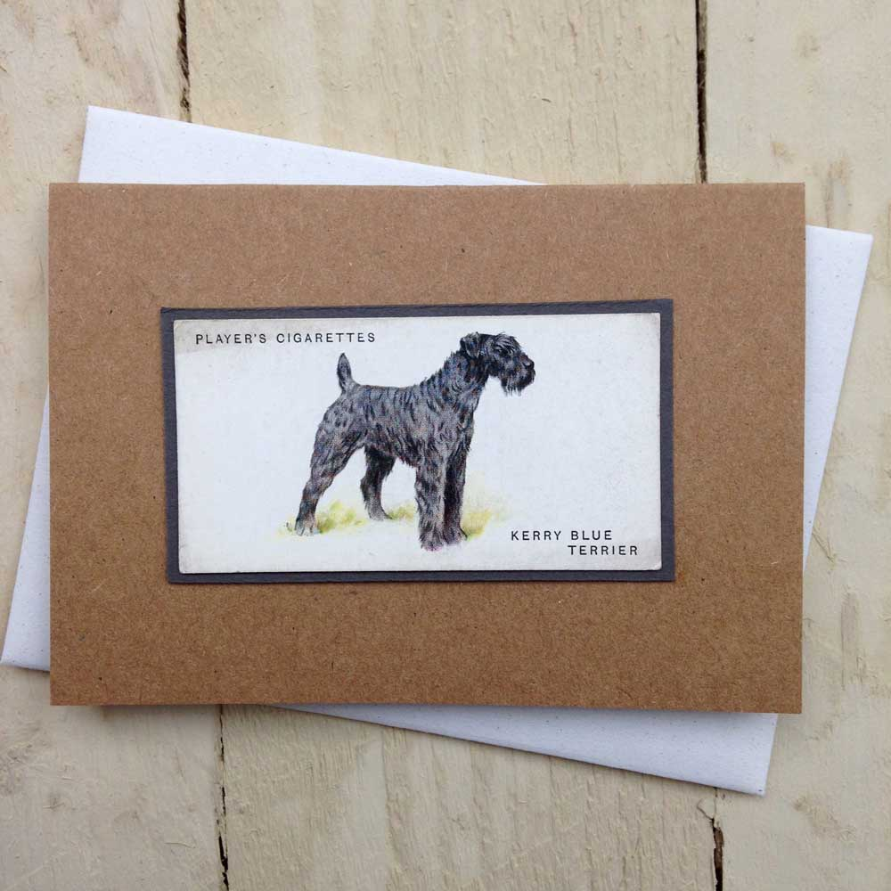 Kerry Blue Terrier card - The Enlightened Hound