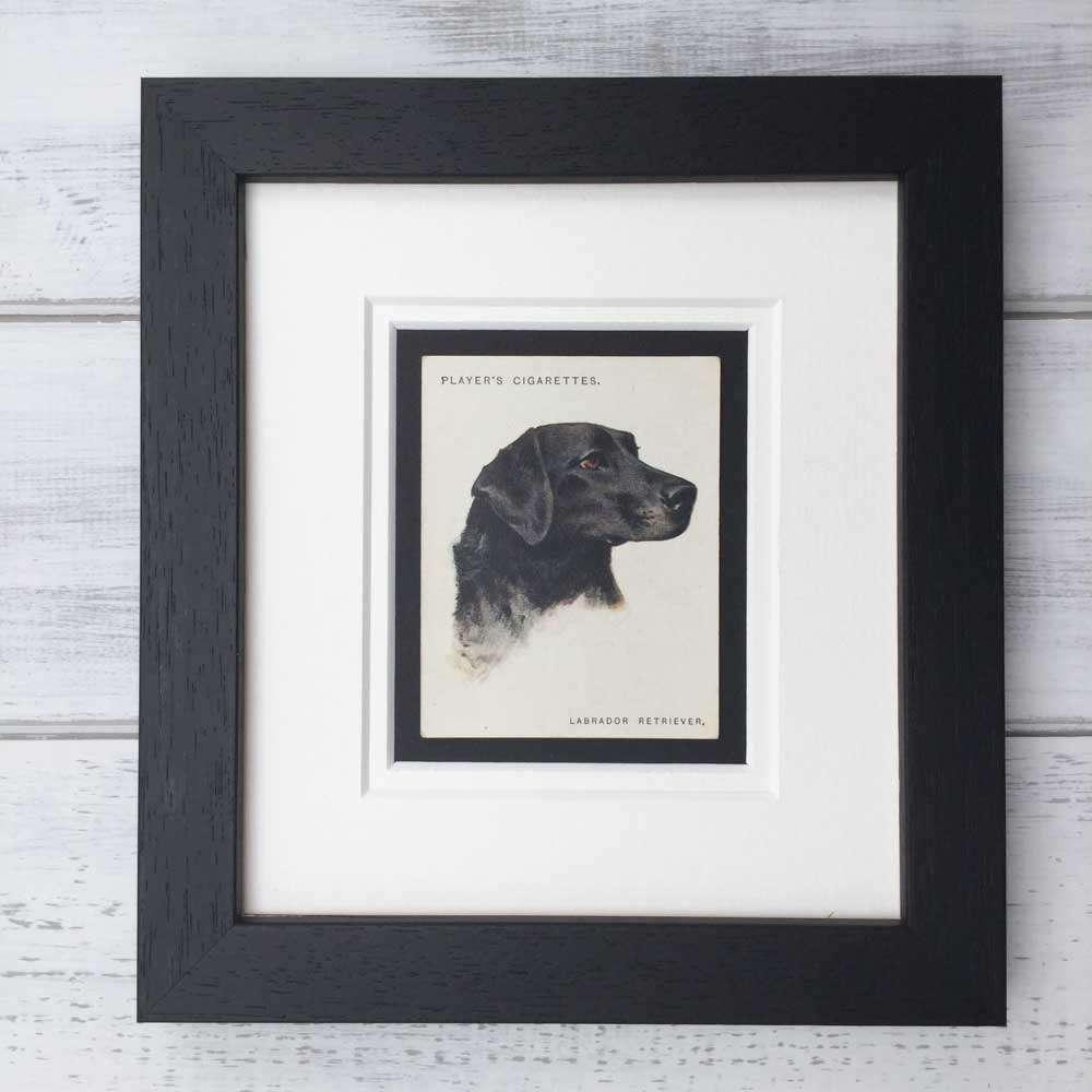Vintage Gifts for Labrador Retriever Lovers - The Enlightened Hound